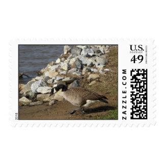 Goose Stamp