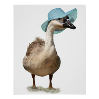 Goose with a Floppy Blue Summer Hat Poster