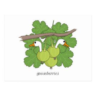 Gooseberries Postcard
