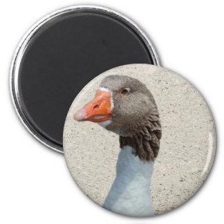 Goosy Goose Magnet