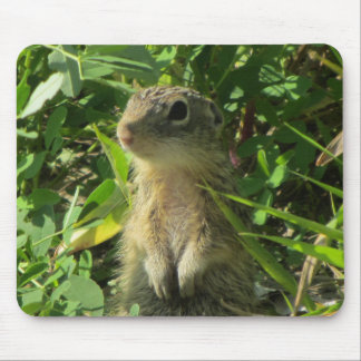 Gopher on riverbank mouse pad