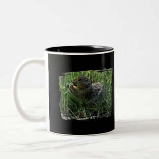 Gopher Snacking Taza