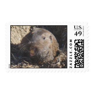 Gopher Stamp