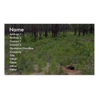 Gopher tortoise burrow and habitat (Gopherus polyp Double-Sided Standard Business Cards (Pack Of 100)