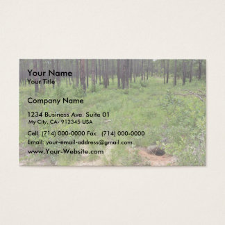 Gopher tortoise burrow and habitat (Gopherus polyp Business Card