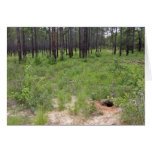 Gopher tortoise burrow and habitat (Gopherus polyp Cards