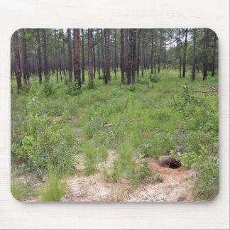 Gopher tortoise burrow and habitat (Gopherus polyp Mouse Pad