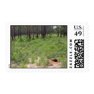 Gopher tortoise burrow and habitat (Gopherus polyp Postage Stamp