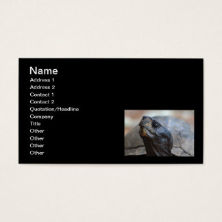 gopher tortoise business card