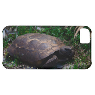 Gopher Tortoise Cover For iPhone 5C