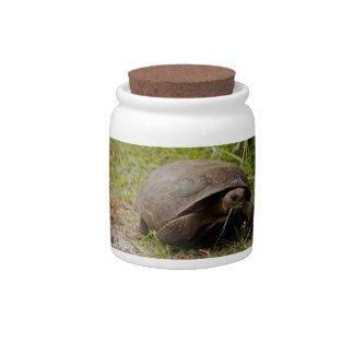 Gopher Tortoise Eats Lunch Candy Jar