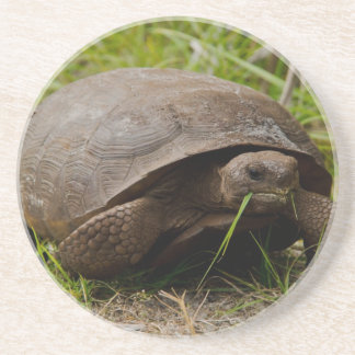 Gopher Tortoise Eats Lunch Coaster