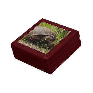 Gopher Tortoise Eats Lunch giftbox Jewelry Box