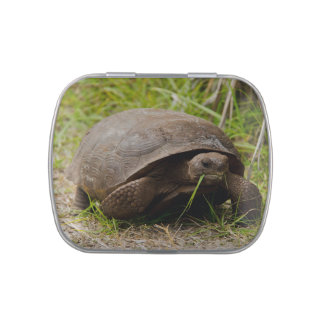 Gopher Tortoise Eats Lunch Jelly Belly Candy Tins