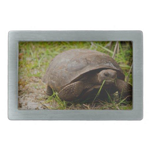 Gopher Tortoise Eats Lunch Rectangular Belt Buckle