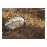 Gopher Tortoise Greeting Cards