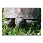 Gopher Tortoise in the Grass Greeting Card
