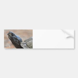 Gopher Tortoise Profile Bumper Sticker