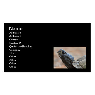 Gopher Tortoise Profile Business Card