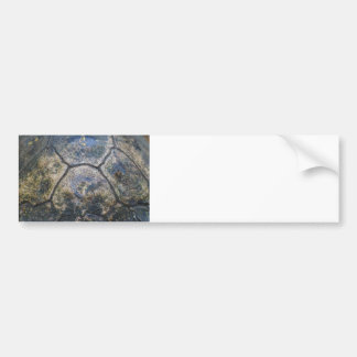 Gopher Tortoise Shell Bumper Sticker