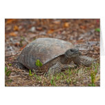 Gopher Tortoise Turtle Cards