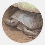 Gopher Turtle Classic Round Sticker