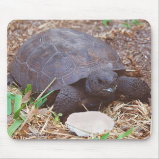 Gopher Turtle with Cuttlebone Mustache Mousepad
