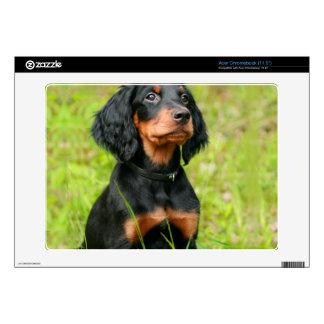 Gordon Setter Attentive Black Dog Puppy Acer Chromebook Skins