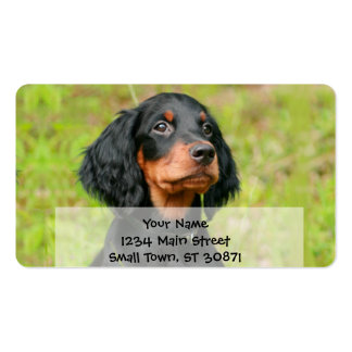 Gordon Setter Attentive Black Dog Puppy Pack Of Standard Business Cards