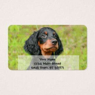Gordon Setter Attentive Black Dog Puppy Business Card