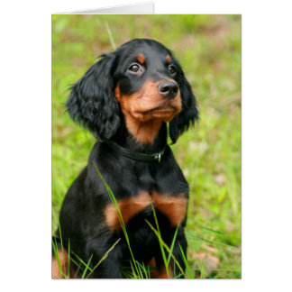 Gordon Setter Attentive Black Dog Puppy Card