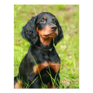 "Gordon Setter Attentive Black Dog Puppy 8.5"" X 11"" Flyer"