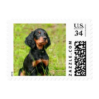 Gordon Setter Attentive Black Dog Puppy Postage
