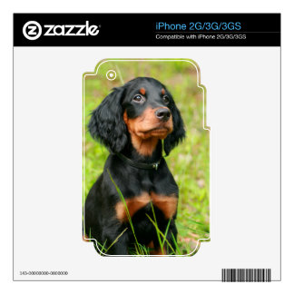 Gordon Setter Attentive Black Dog Puppy Skins For The iPhone 3G