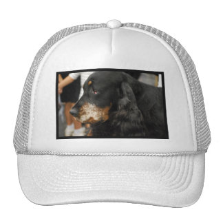 Gordon Setter Baseball Hat