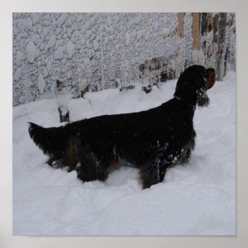 Gordon Setter in a Snowstorm Canvas Print
