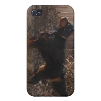 Gordon Setter iPhone Case iPhone 4/4S Cover