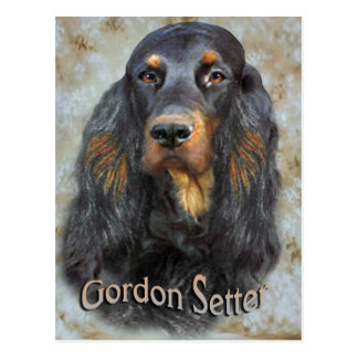 Gordon Setter Portrait gifts Postcard