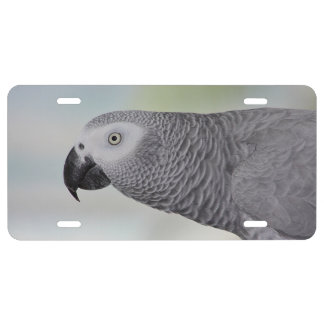 Gorgeous African Grey Parrot License Plate