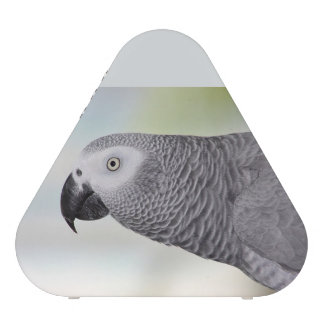 Gorgeous African Grey Parrot Speaker