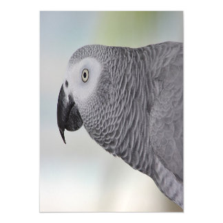 Gorgeous African Grey Parrot Magnetic Invitations