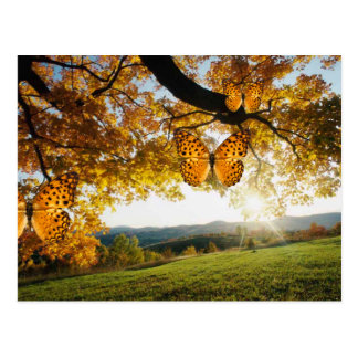 Gorgeous Autumn Landscape butterflies postcard