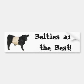 Gorgeous Belted Galloway Steer Cutout Bumper Stickers