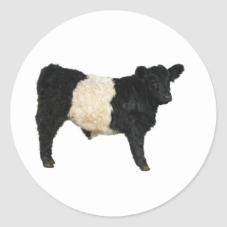 Gorgeous Belted Galloway Steer Cutout Classic Round Sticker