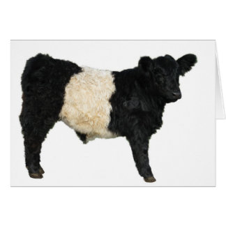 Gorgeous Belted Galloway Steer Cutout Greeting Card