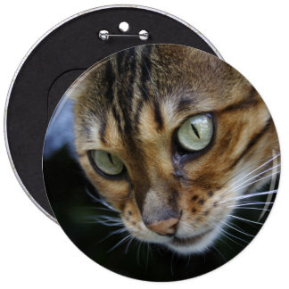 Gorgeous Bengal Cat 6 Inch Round Button