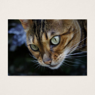 Gorgeous Bengal Cat Business Card