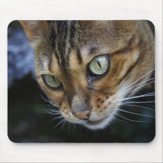 Gorgeous Bengal Cat Mouse Pad