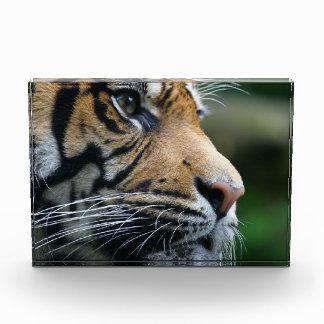 Gorgeous Bengal Tiger Face Acrylic Award