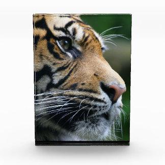 Gorgeous Bengal Tiger Face Awards